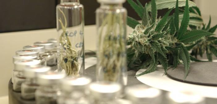 ANVISA autoriza prescrição de medicamento à base de cannabis para paciente com Alzheimer